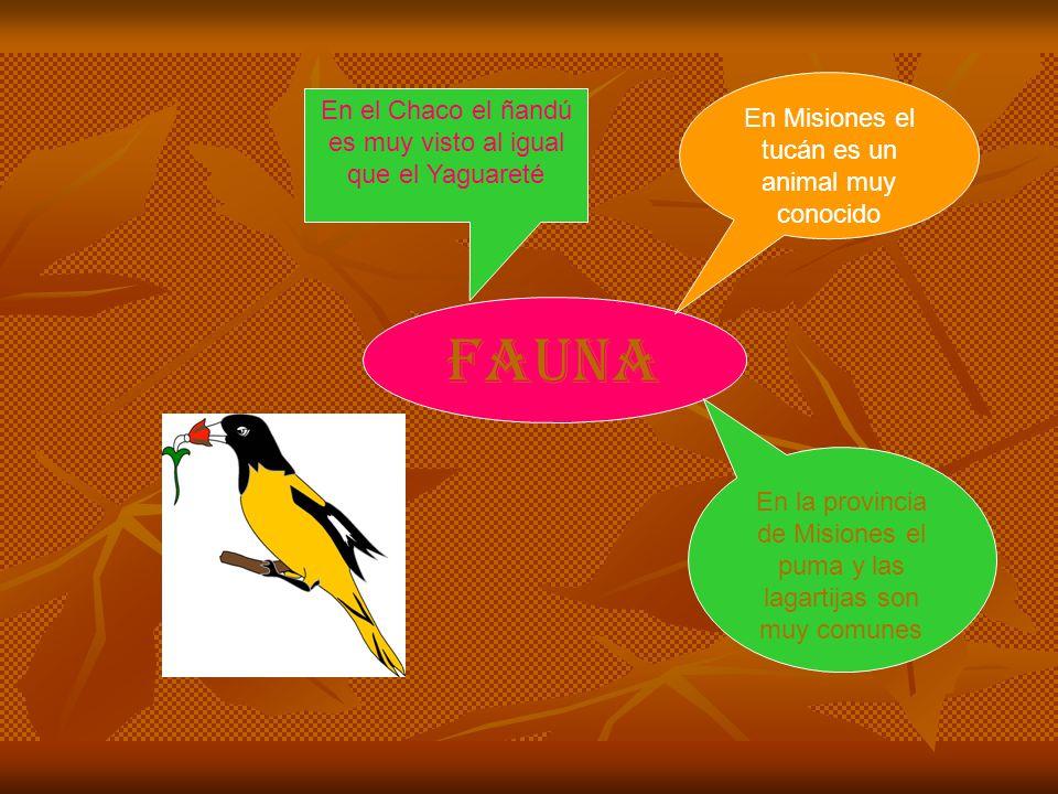 fauna En Misiones el tucán es un animal muy conocido