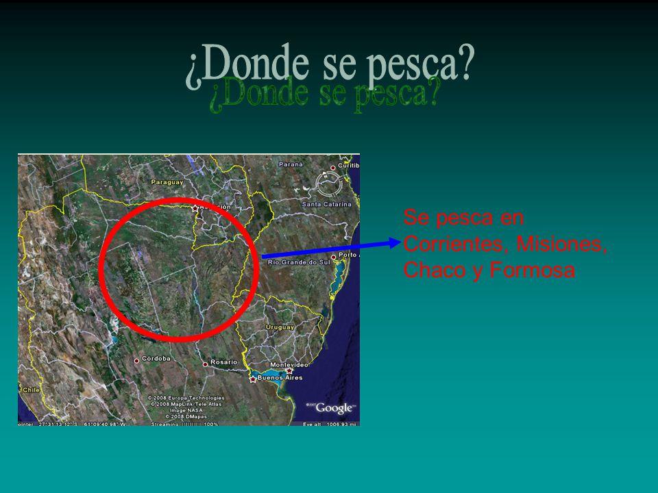 ¿Donde se pesca Se pesca en Corrientes, Misiones, Chaco y Formosa