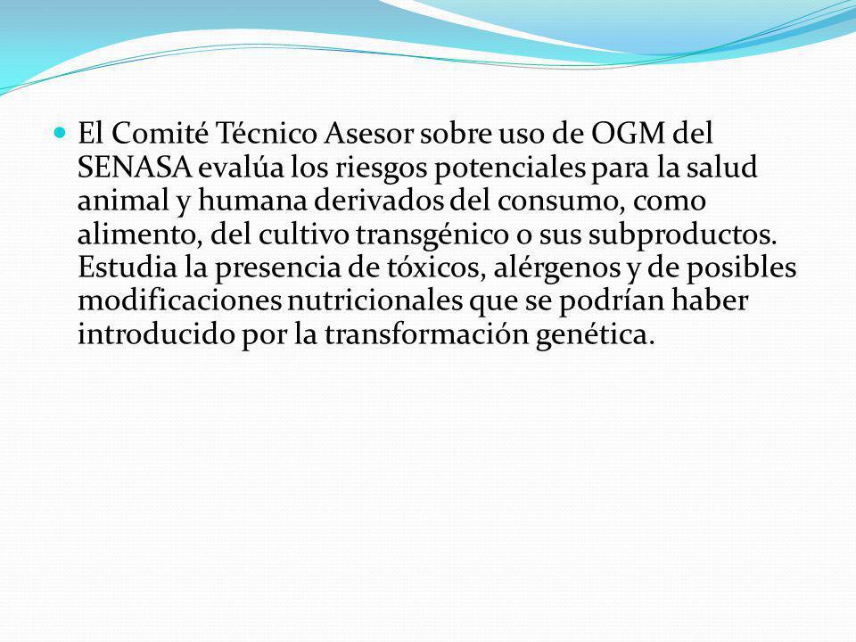 El Comité Técnico Asesor sobre uso de OGM del SENASA evalúa los riesgos potenciales para la salud animal y humana derivados del consumo, como alimento, del cultivo transgénico o sus subproductos.