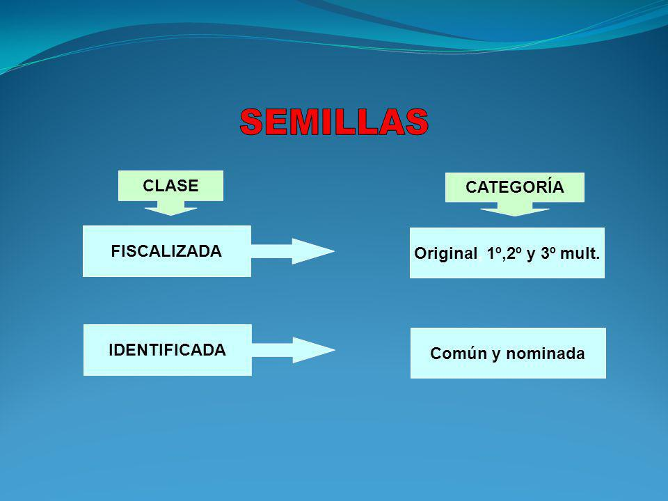SEMILLAS CLASE CATEGORÍA FISCALIZADA Original, 1º,2º y 3º mult.