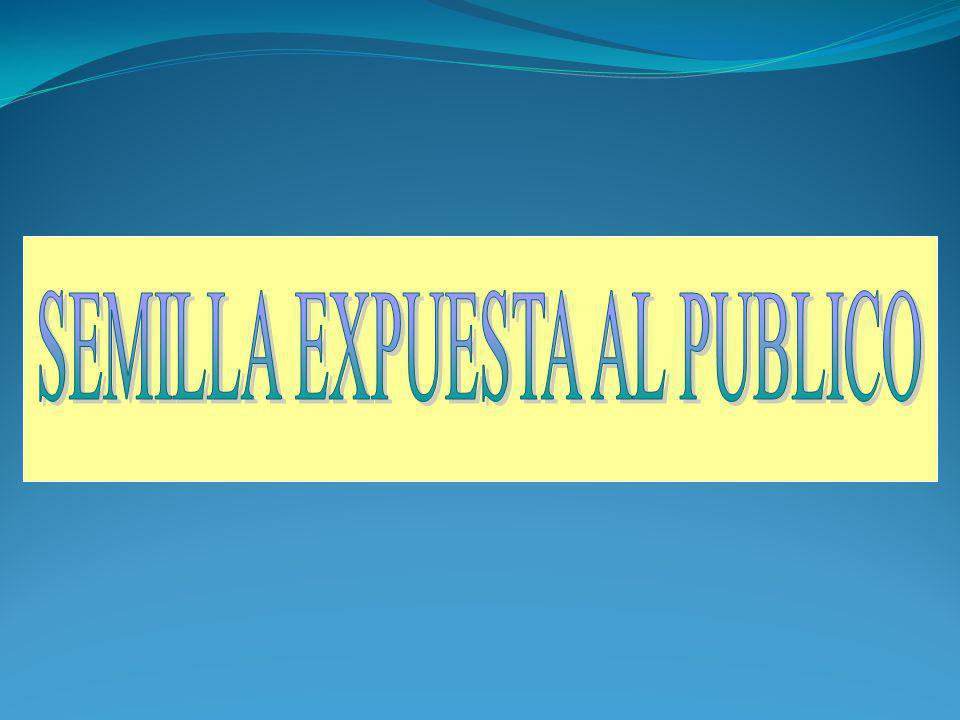 SEMILLA EXPUESTA AL PUBLICO