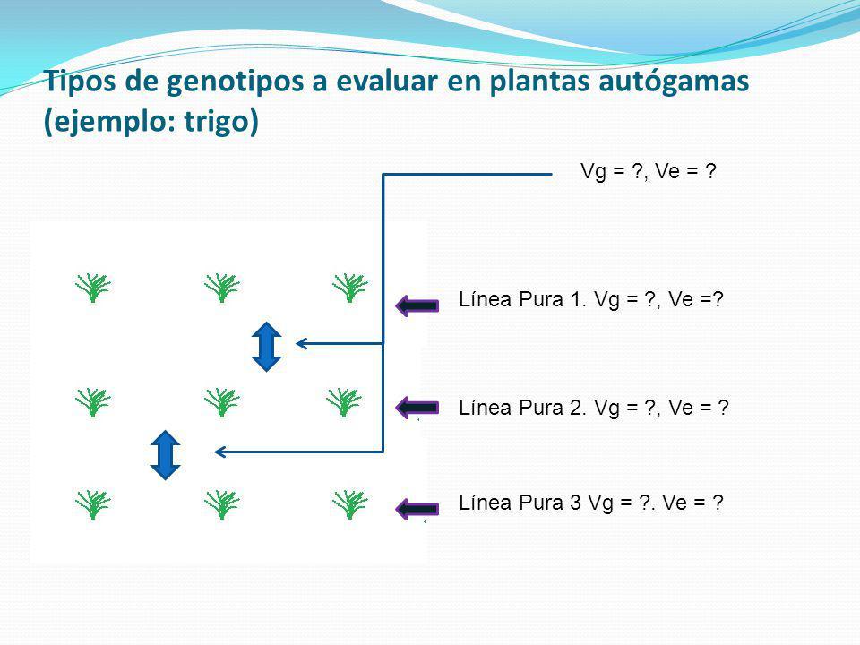 Tipos de genotipos a evaluar en plantas autógamas (ejemplo: trigo)