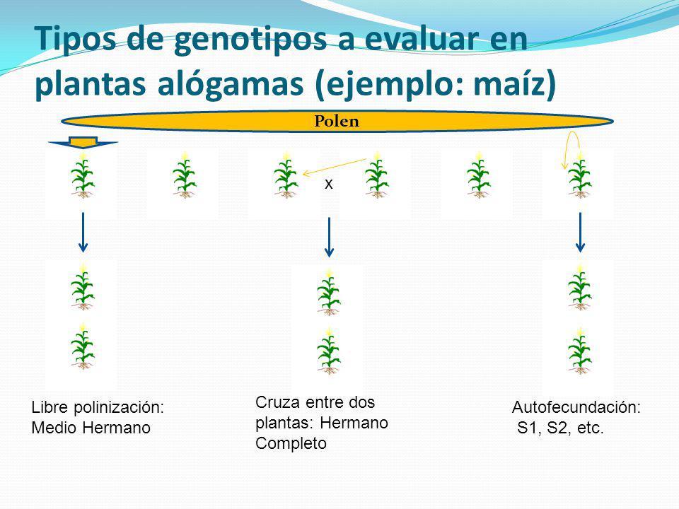 Tipos de genotipos a evaluar en plantas alógamas (ejemplo: maíz)