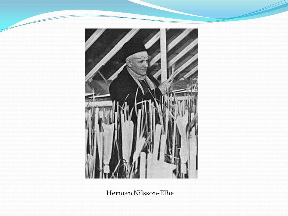 Herman Nilsson-Elhe