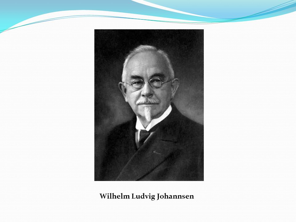 Wilhelm Ludvig Johannsen