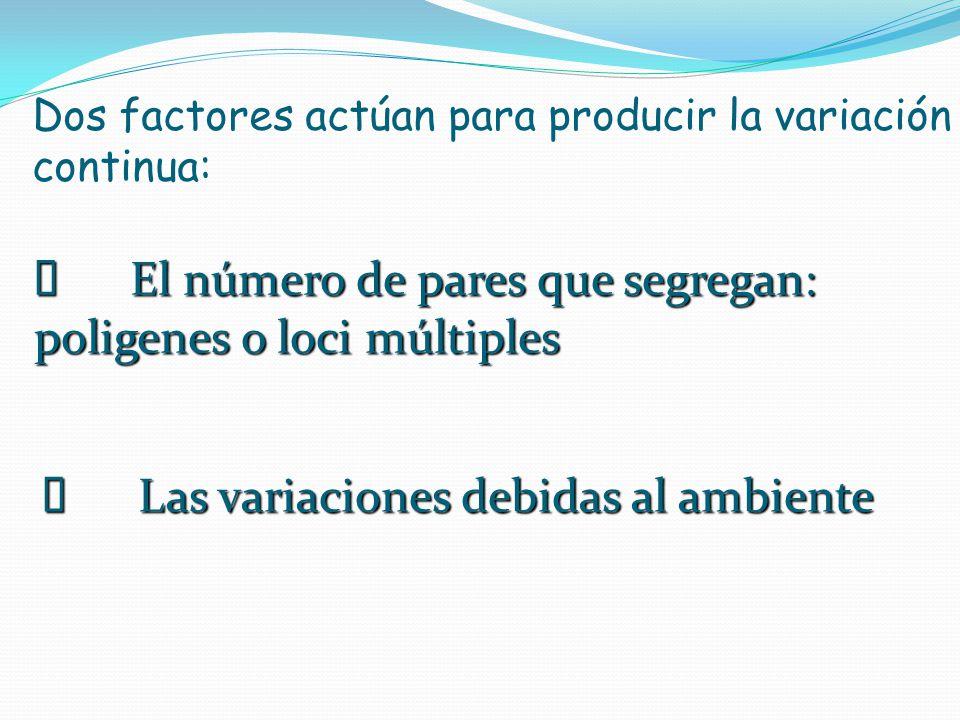 Dos factores actúan para producir la variación continua: