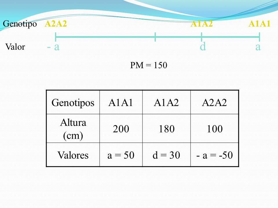 - a d a Genotipos A1A1 A1A2 A2A2 Altura (cm) 200 180 100 Valores