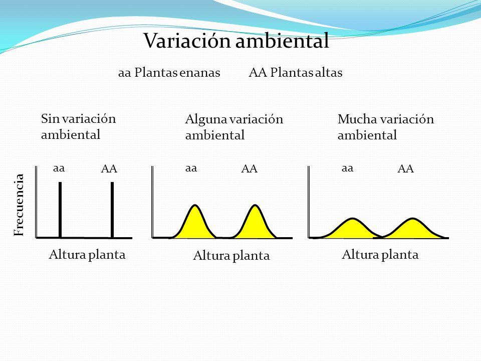 Variación ambiental aa Plantas enanas AA Plantas altas