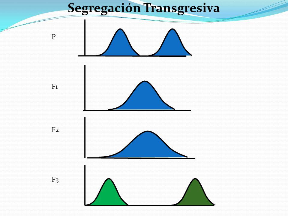 Segregación Transgresiva