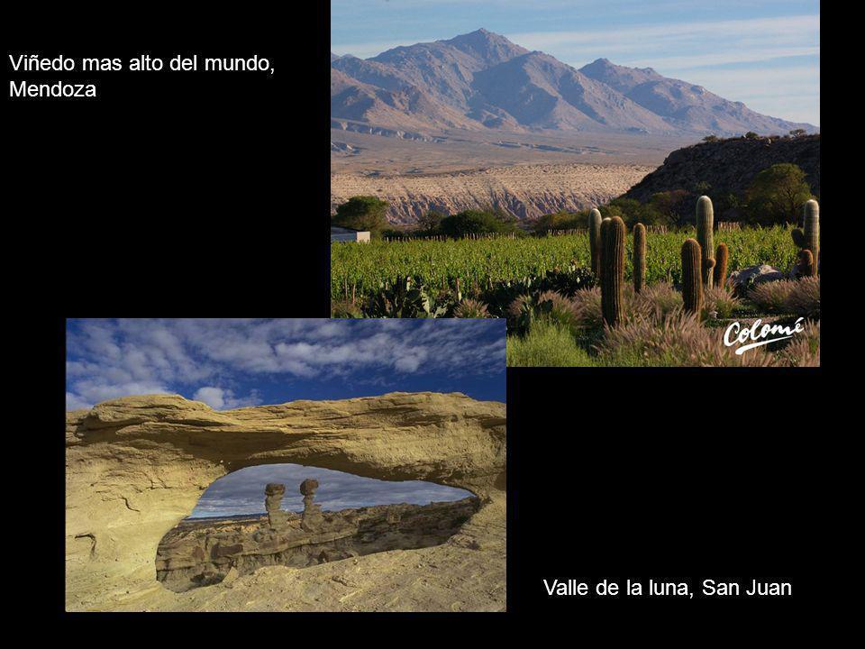 Viñedo mas alto del mundo, Mendoza