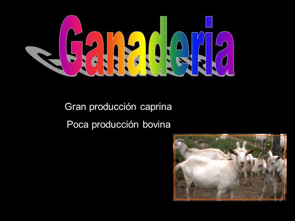 Ganaderia Gran producción caprina Poca producción bovina