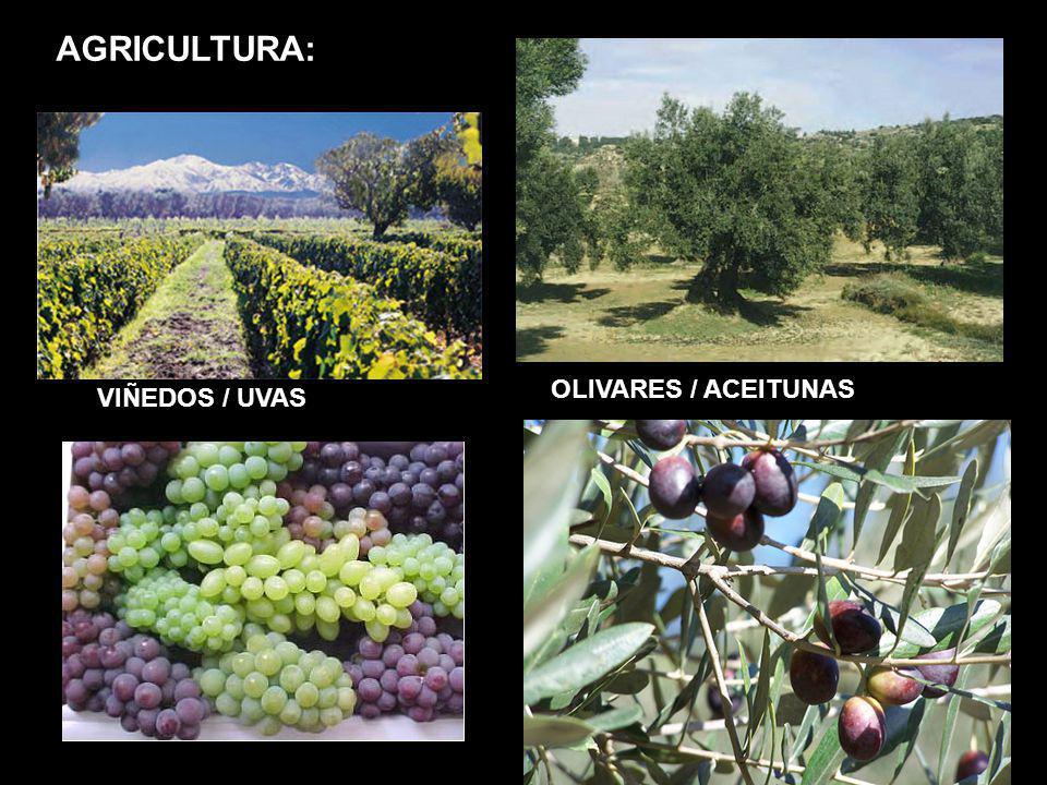 AGRICULTURA: OLIVARES / ACEITUNAS VIÑEDOS / UVAS