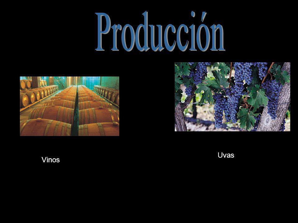 Producción Uvas Vinos