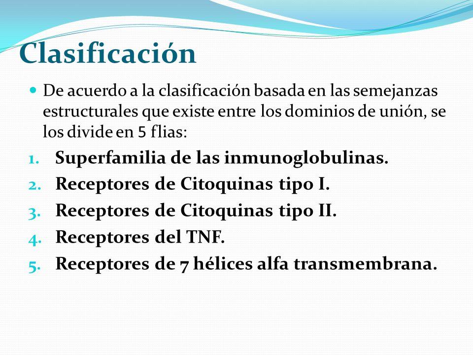 Clasificación Superfamilia de las inmunoglobulinas.