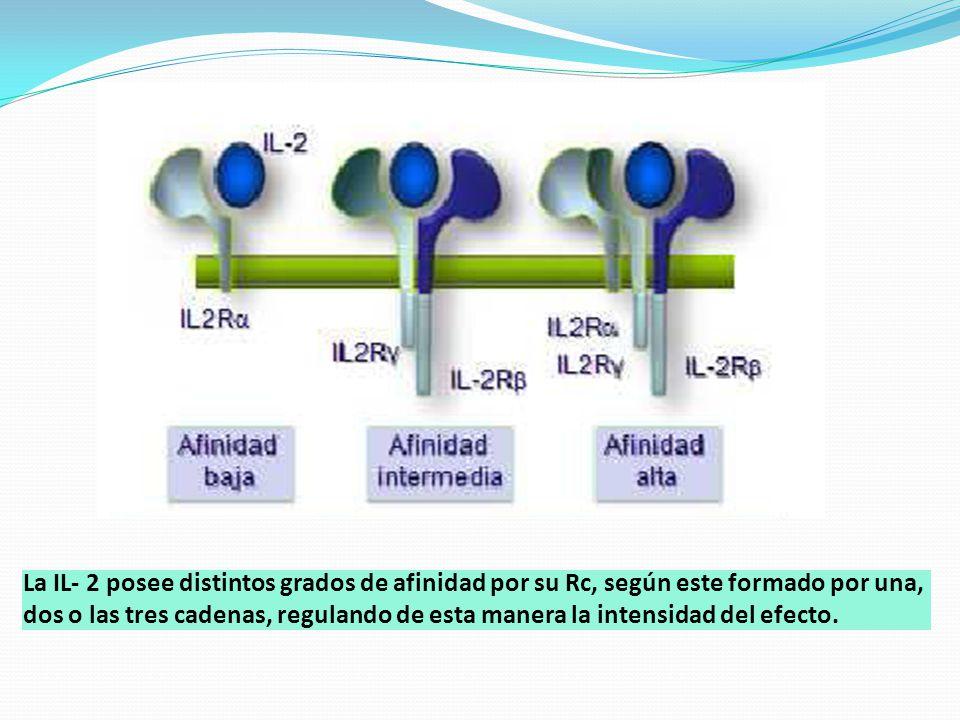 La IL- 2 posee distintos grados de afinidad por su Rc, según este formado por una, dos o las tres cadenas, regulando de esta manera la intensidad del efecto.