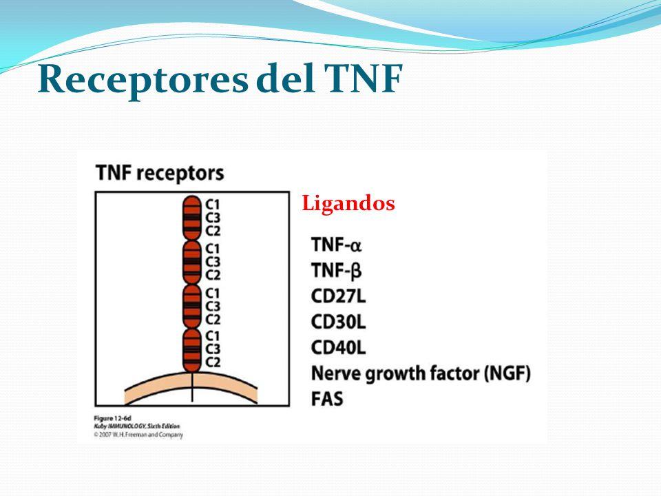 Receptores del TNF Ligandos
