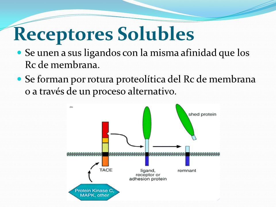 Receptores Solubles Se unen a sus ligandos con la misma afinidad que los Rc de membrana.