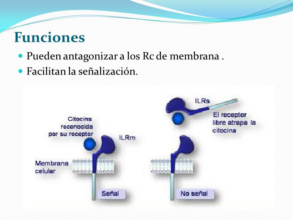 Funciones Pueden antagonizar a los Rc de membrana .