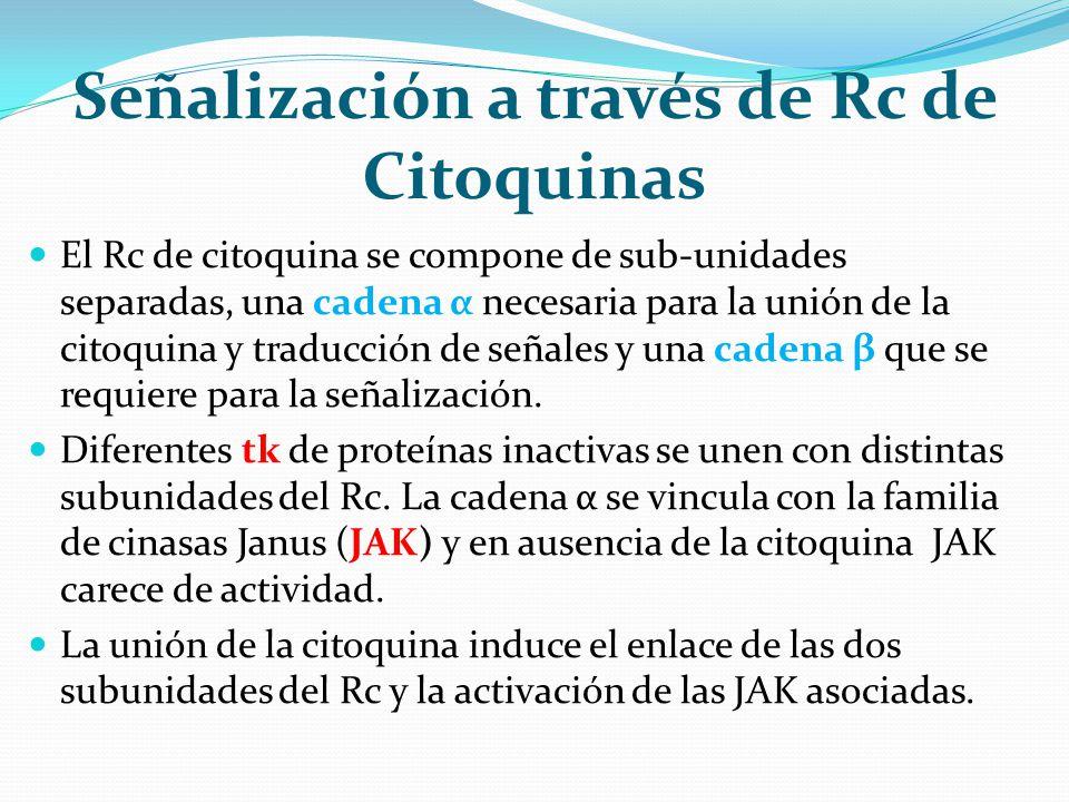 Señalización a través de Rc de Citoquinas