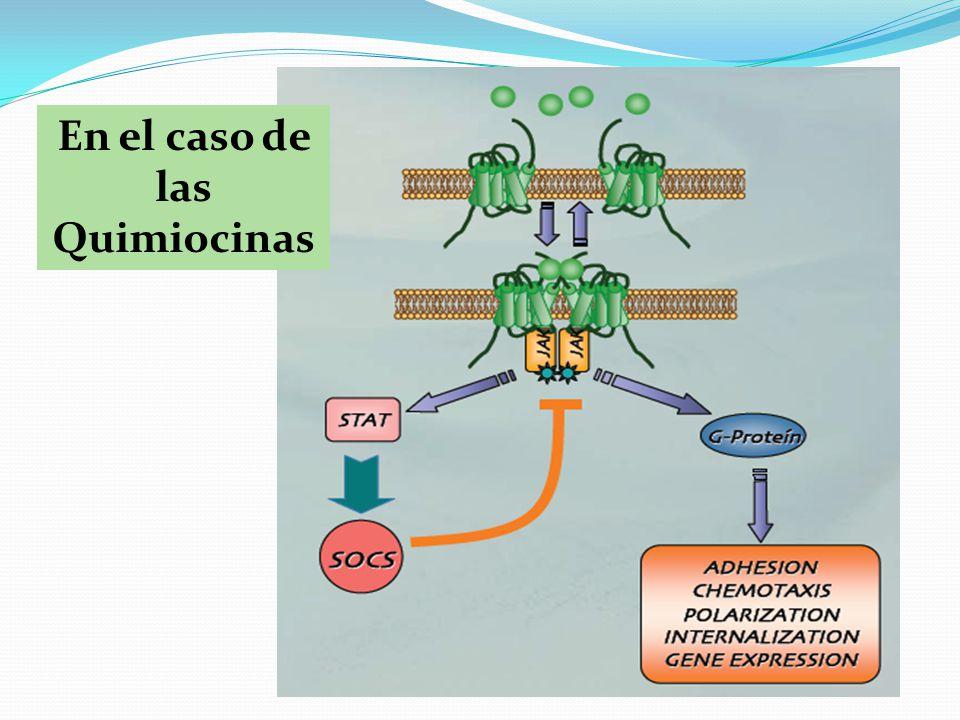 En el caso de las Quimiocinas