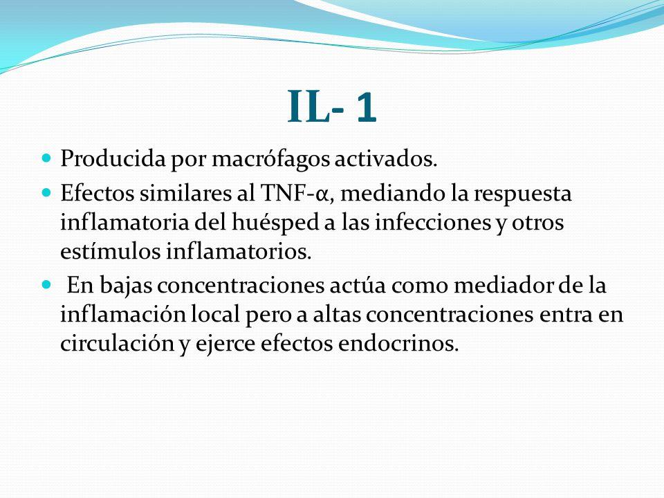 IL- 1 Producida por macrófagos activados.