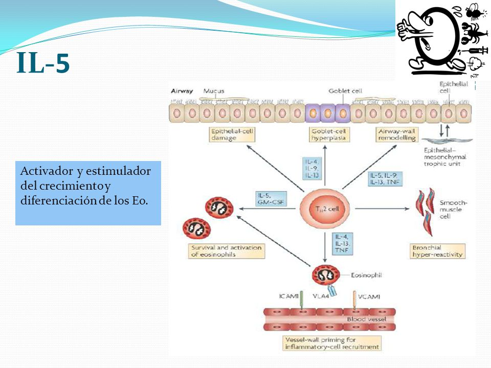 IL-5 Activador y estimulador del crecimiento y diferenciación de los Eo.