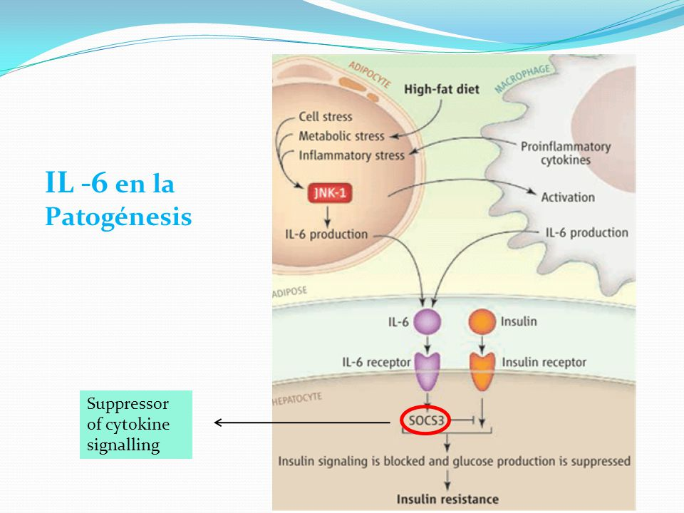 IL -6 en la Patogénesis Suppressor of cytokine signalling