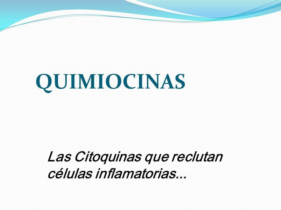 QUIMIOCINAS Las Citoquinas que reclutan células inflamatorias...