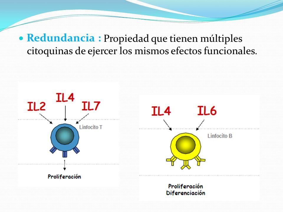 Redundancia : Propiedad que tienen múltiples citoquinas de ejercer los mismos efectos funcionales.