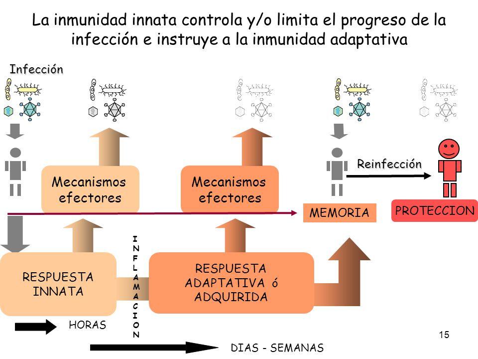 La inmunidad innata controla y/o limita el progreso de la infección e instruye a la inmunidad adaptativa