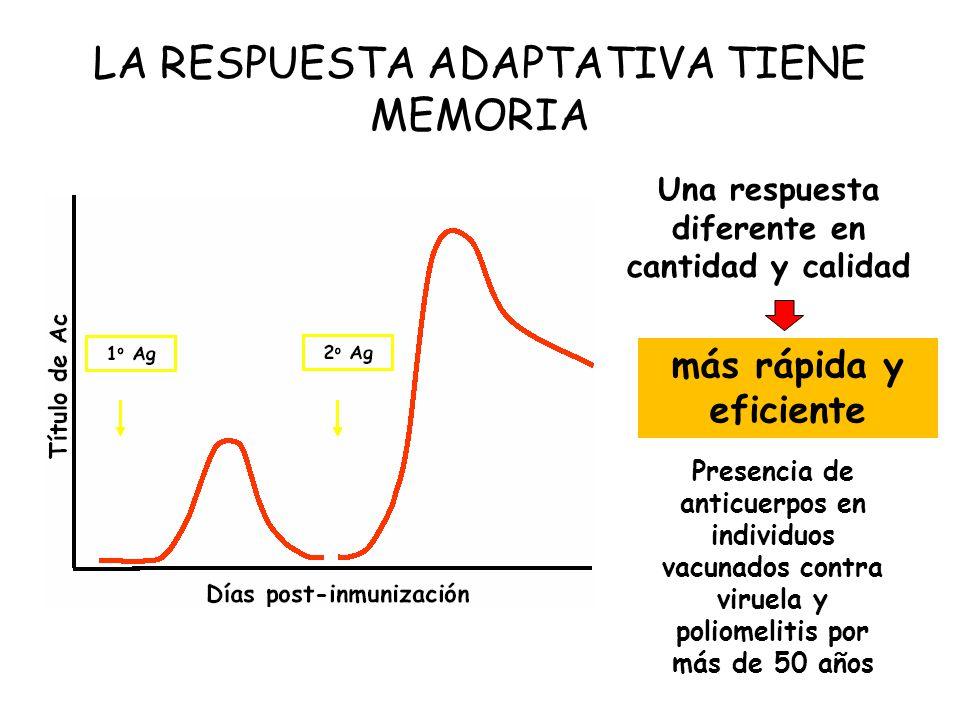 LA RESPUESTA ADAPTATIVA TIENE MEMORIA
