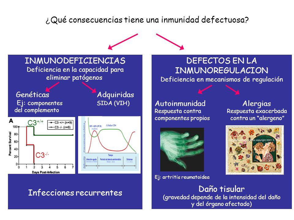 ¿Qué consecuencias tiene una inmunidad defectuosa