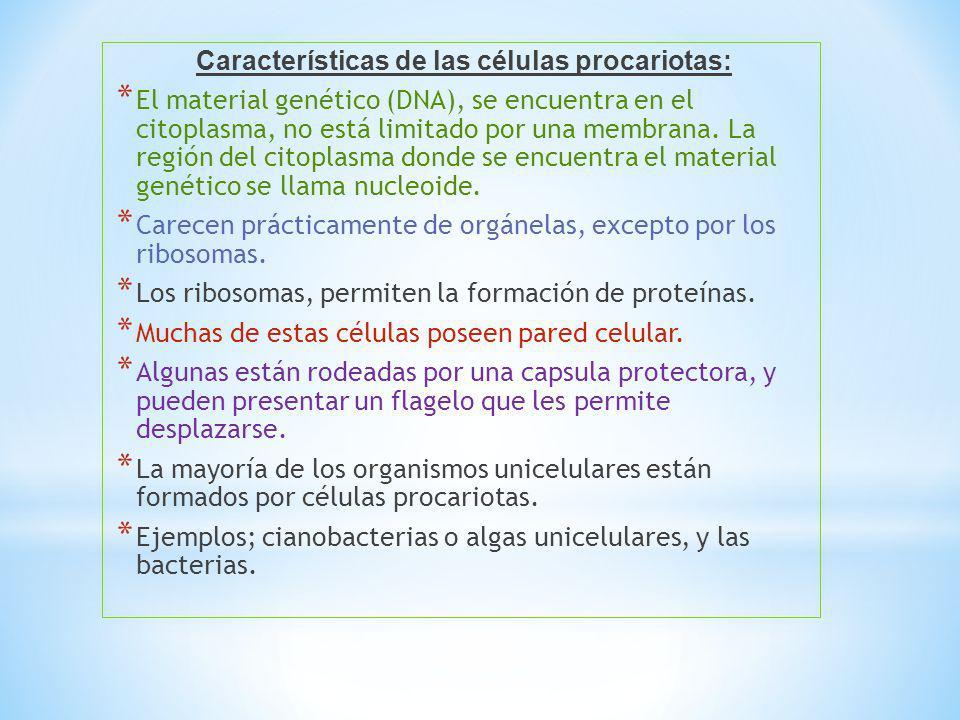 Características de las células procariotas: