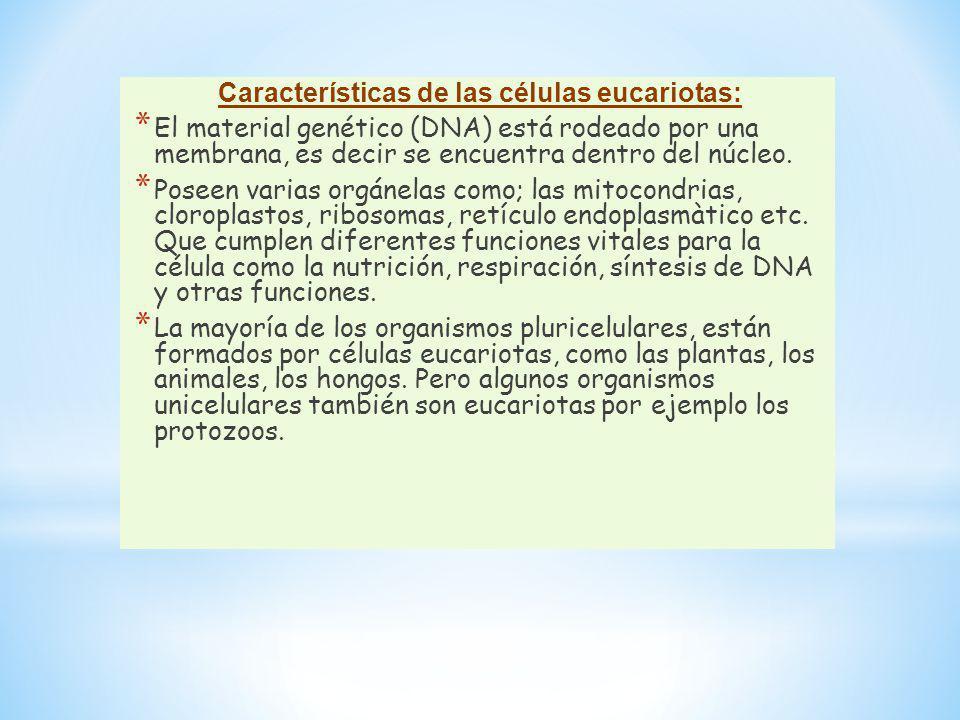 Características de las células eucariotas: