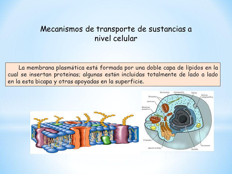 Mecanismos de transporte de sustancias a nivel celular