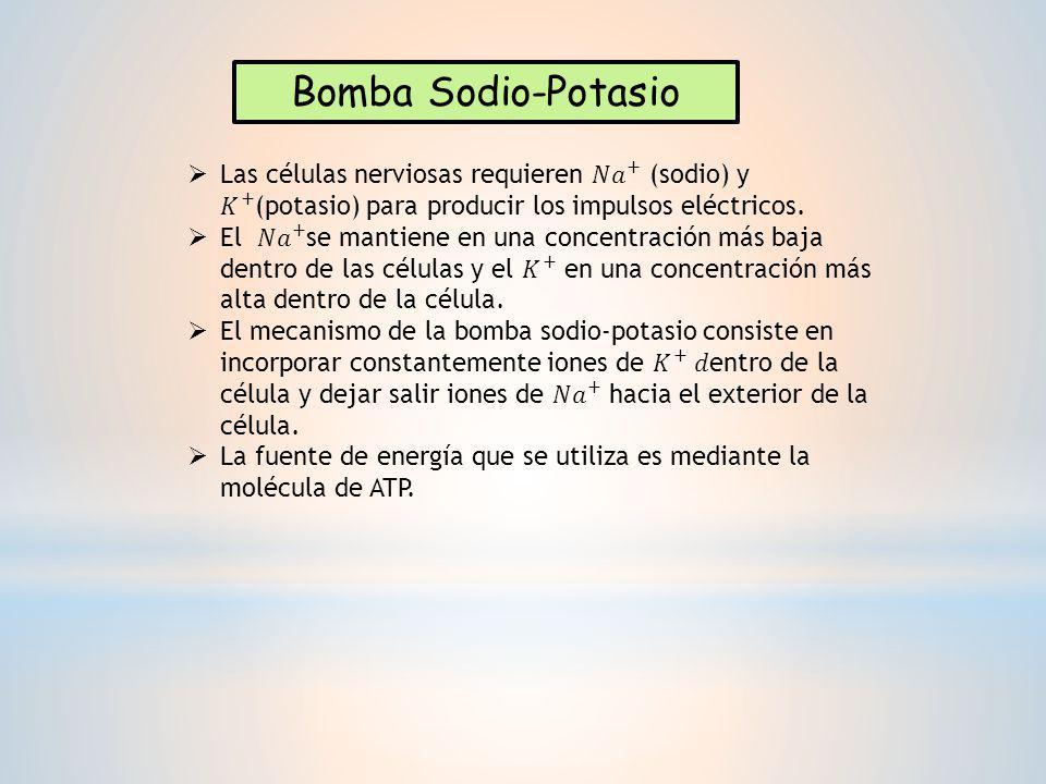 Bomba Sodio-Potasio Las células nerviosas requieren 𝑁𝑎 + (sodio) y 𝐾 + (potasio) para producir los impulsos eléctricos.