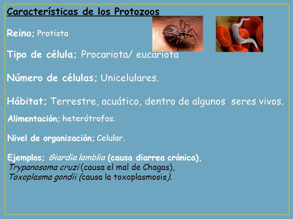 Características de los Protozoos Reino; Protista