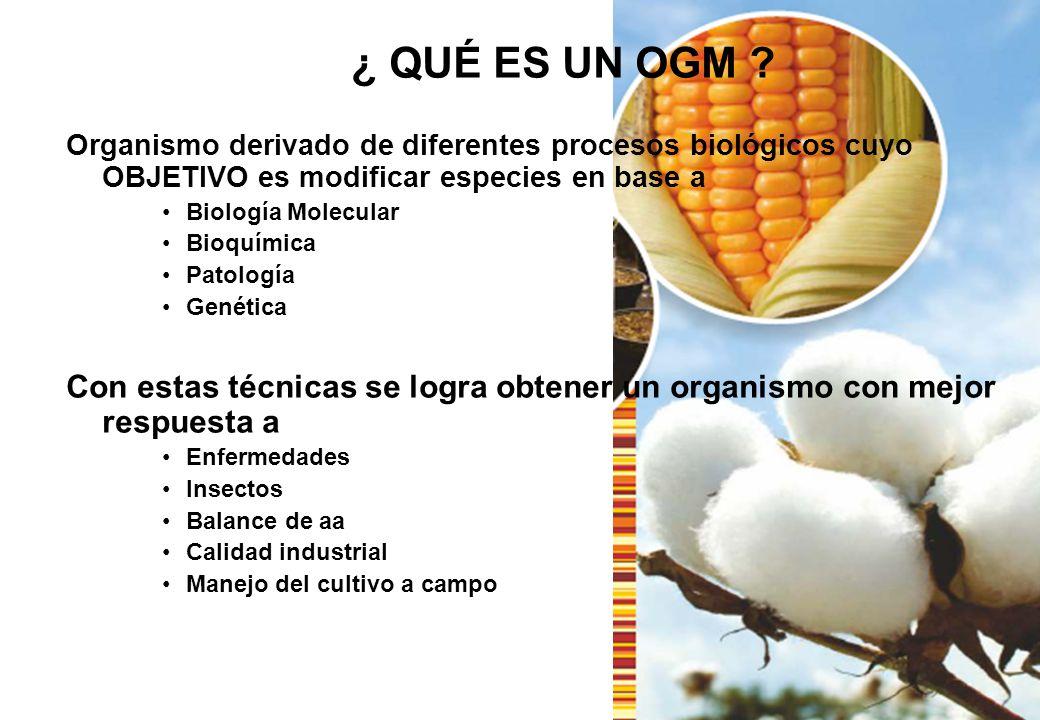 ¿ QUÉ ES UN OGM Organismo derivado de diferentes procesos biológicos cuyo OBJETIVO es modificar especies en base a.