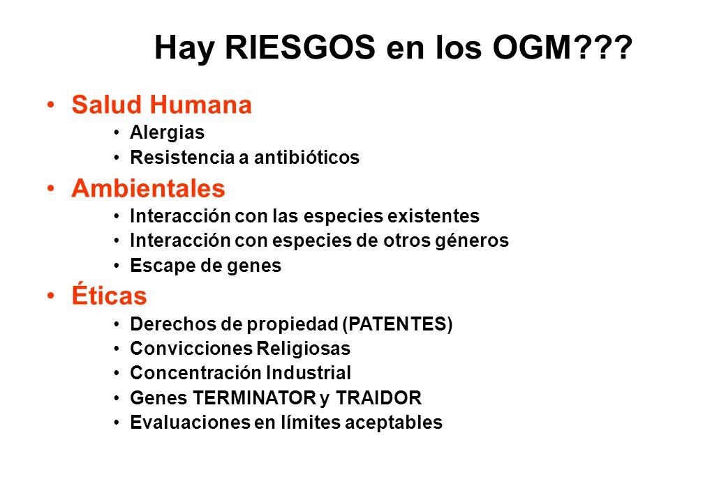 Hay RIESGOS en los OGM Salud Humana Ambientales Éticas Alergias