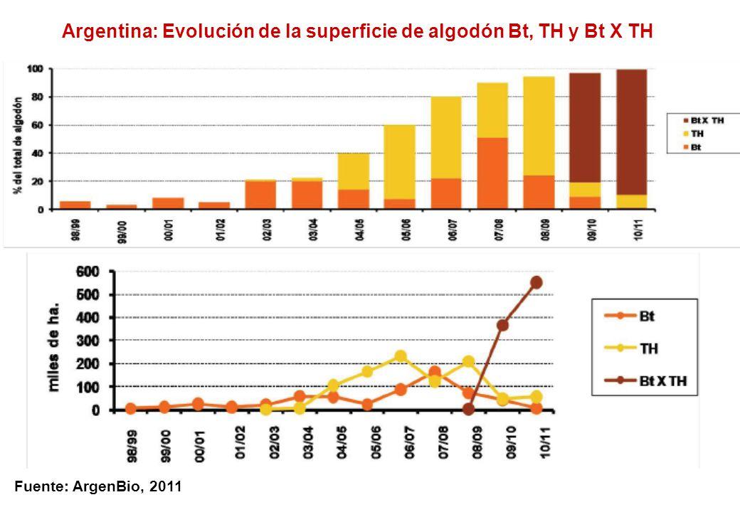 Argentina: Evolución de la superficie de algodón Bt, TH y Bt X TH