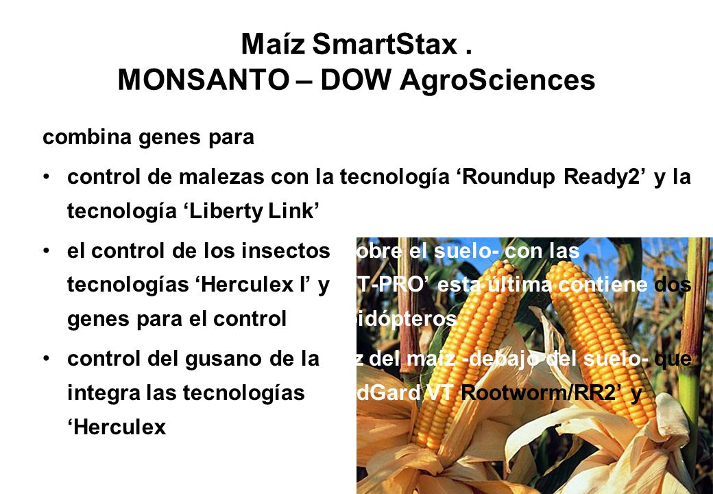 Maíz SmartStax . MONSANTO – DOW AgroSciences