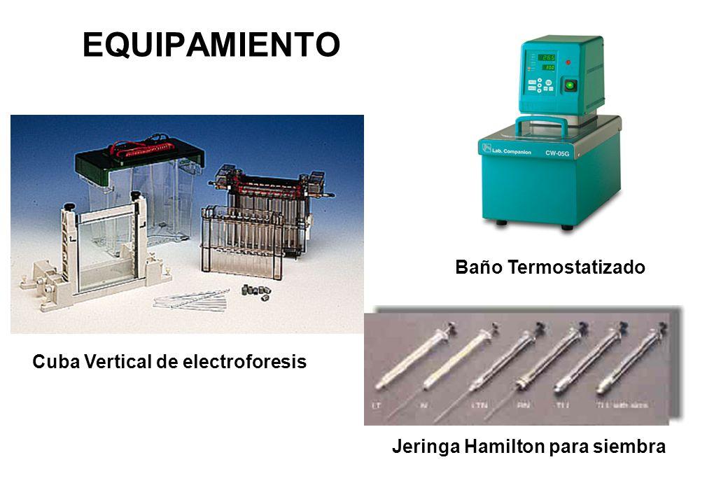 EQUIPAMIENTO Baño Termostatizado Cuba Vertical de electroforesis
