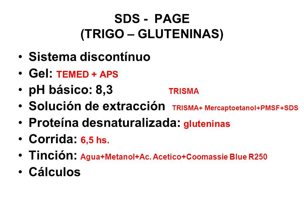 SDS - PAGE (TRIGO – GLUTENINAS)