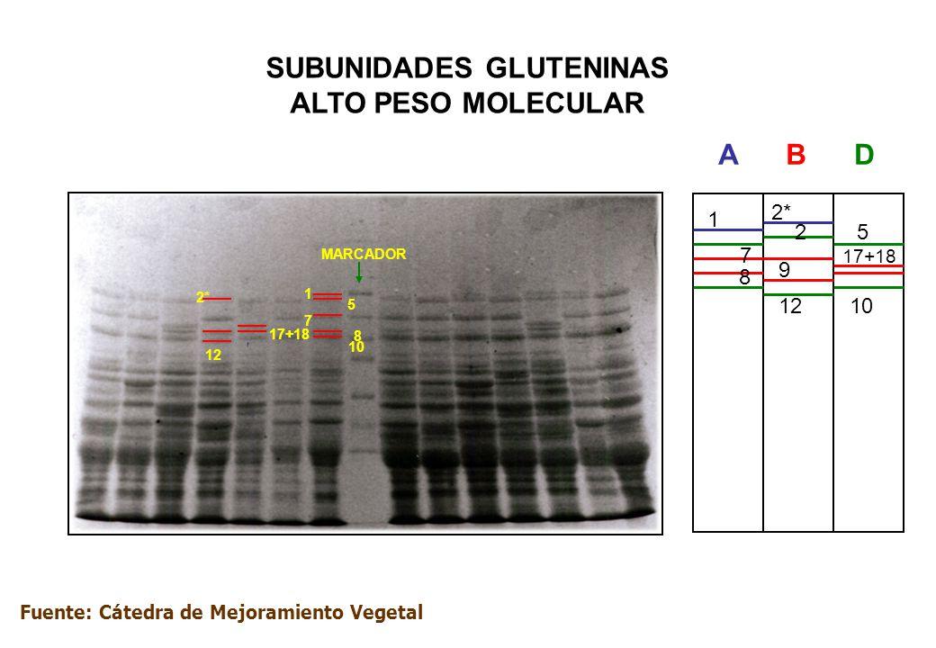 SUBUNIDADES GLUTENINAS ALTO PESO MOLECULAR