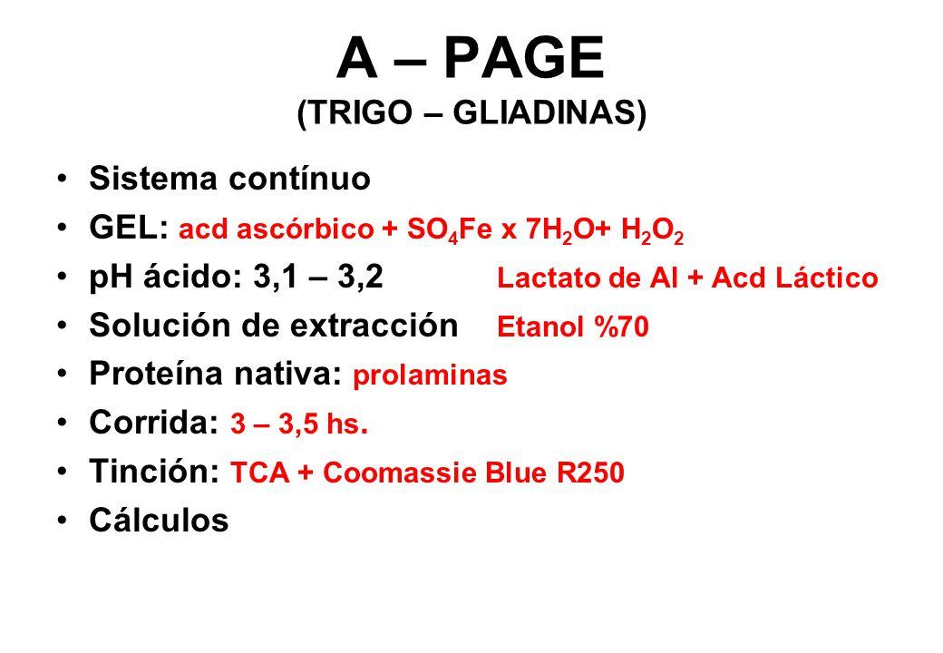 A – PAGE (TRIGO – GLIADINAS)