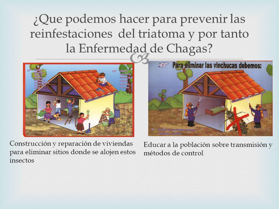 ¿Que podemos hacer para prevenir las reinfestaciones del triatoma y por tanto la Enfermedad de Chagas