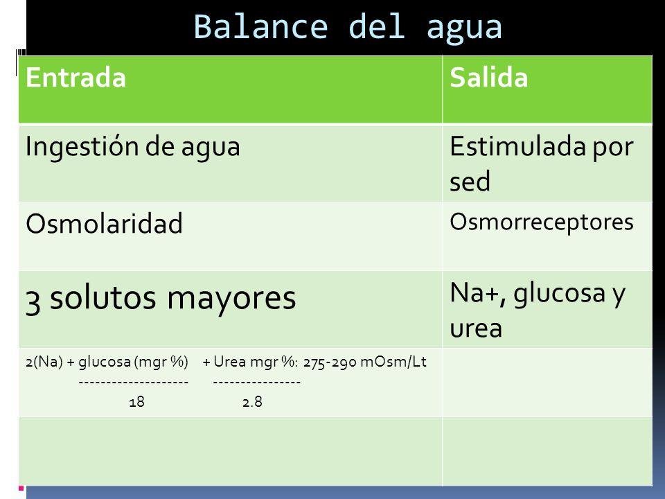 Balance del agua 3 solutos mayores Entrada Salida Ingestión de agua