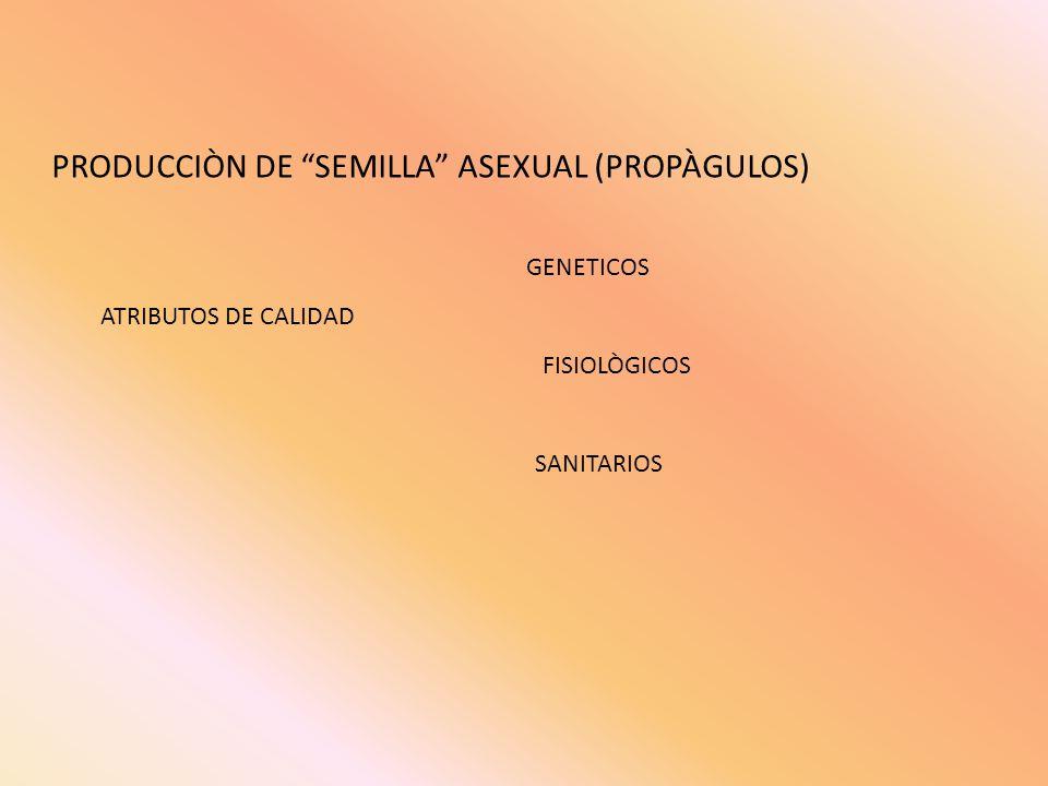 PRODUCCIÒN DE SEMILLA ASEXUAL (PROPÀGULOS)
