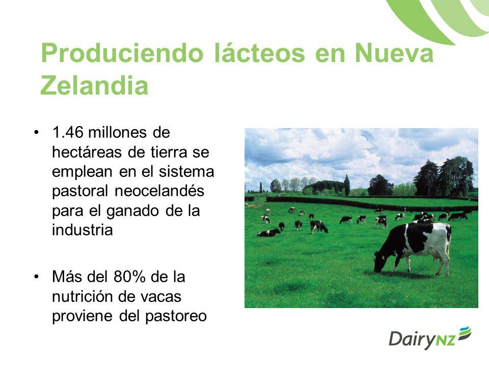 Produciendo lácteos en Nueva Zelandia