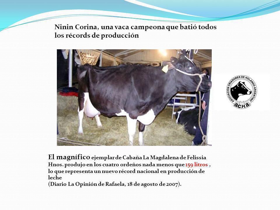 Ninin Corina, una vaca campeona que batió todos los récords de producción